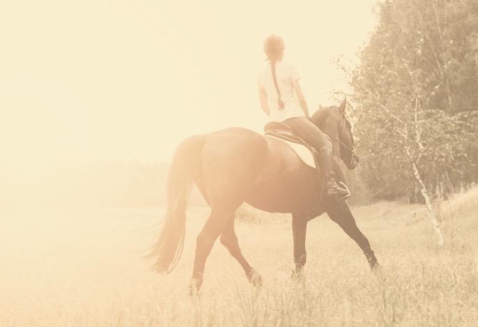 Lernen von Pferden